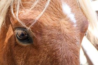 TapiaBrosFarms-HorseCloseup-T1dlife